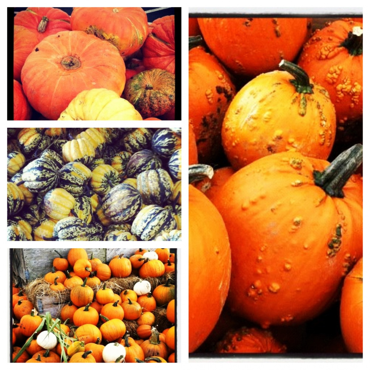squash-and-pumpkins