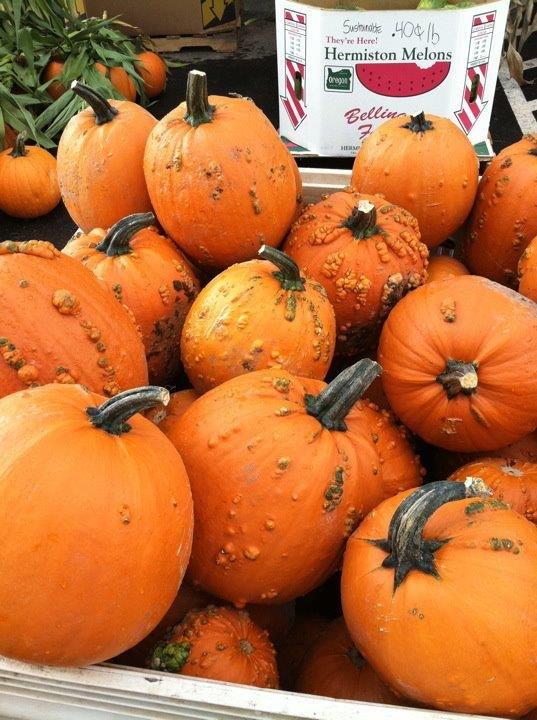 Warted pumpkins