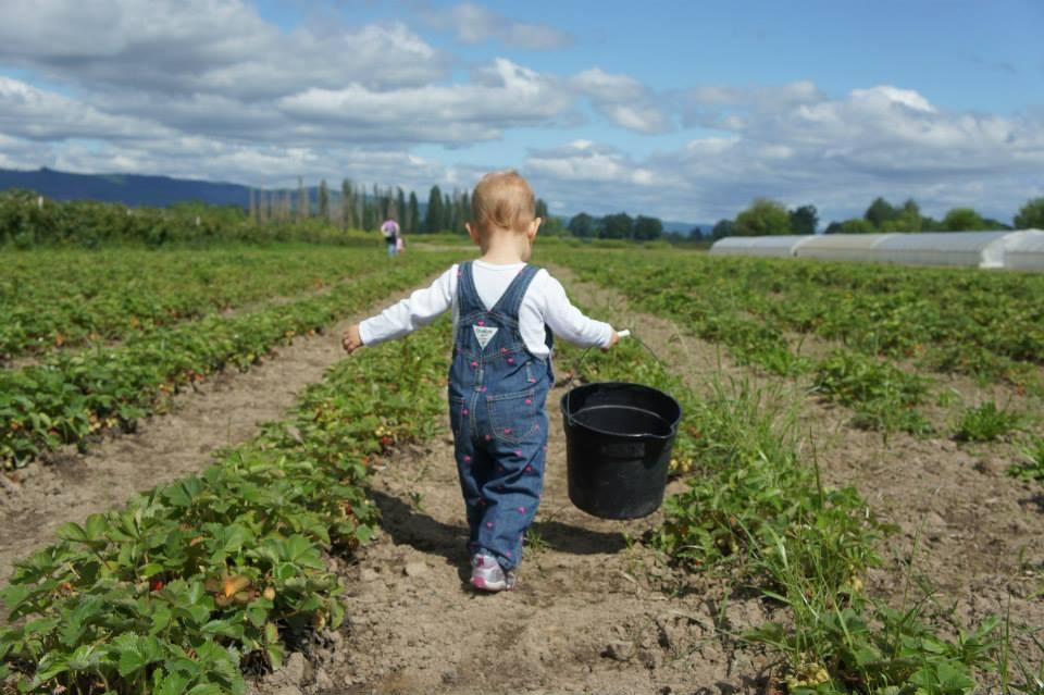 baby-in-strawberry-field