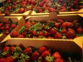 strawberries-1